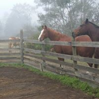 Horse Sitting | Volusia | Gallery