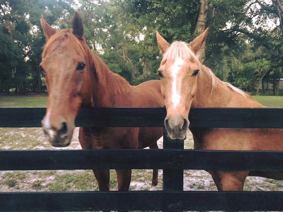 Chabby & Cruiser | Horse Sitting |