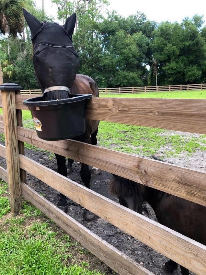 Sara & Thunder | Horse Sitting