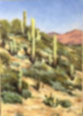 saguaro2.png