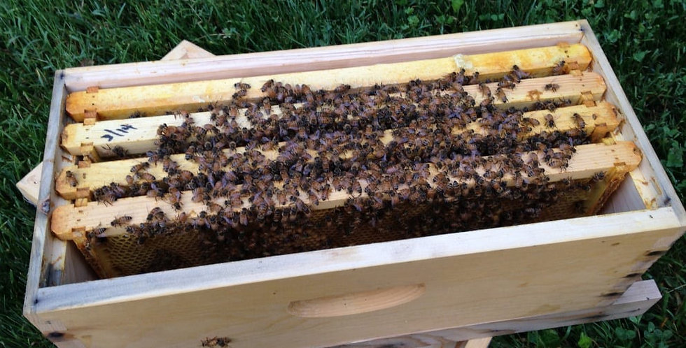 Nucleus (NUC) Package Live Bees & Queen