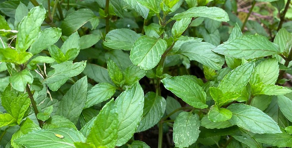 Spearmint Organically Farmed