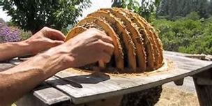 sun hive wood frames.jpg