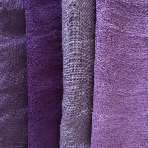 logwood purple