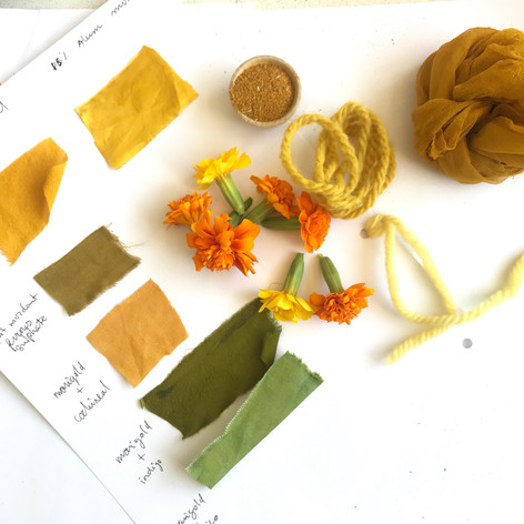 marigold natural dye research
