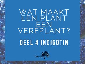 What makes a plant a dye plant? Part 4: Indigotin