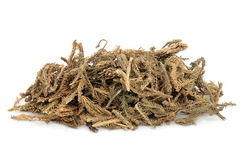 club moss natural alum source for natural dye