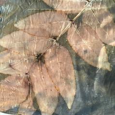 דפוס אקולוגי של גשם זהוב