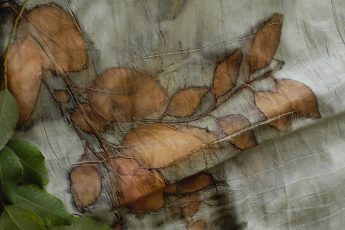 Eucalyptus Diversicolor on Silk