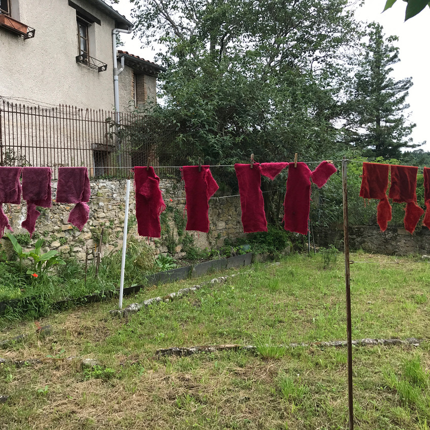 Mader and cochineal natural dye samples drying
