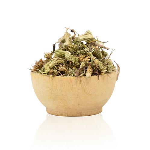 dried club moss bio-accumulator for alum
