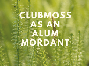 Using Clubmoss as an Alum Mordant