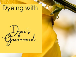 Dyeing with Dyer's Greenweed