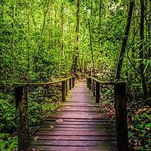 Sarawak-Kuching-Kubah-National-Park-500x