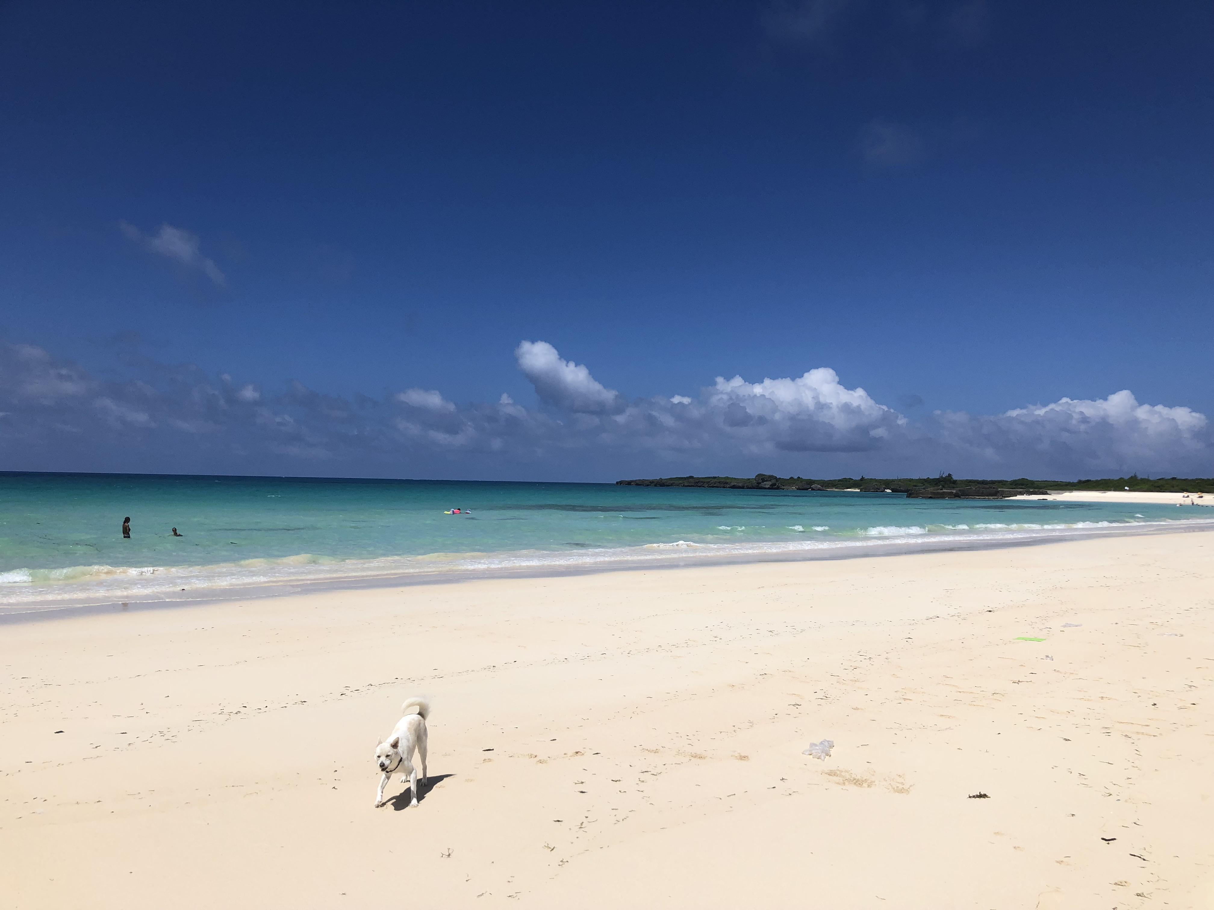 宿からすぐのビーチ