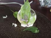グルヌイエール4沼地の泡.jpg