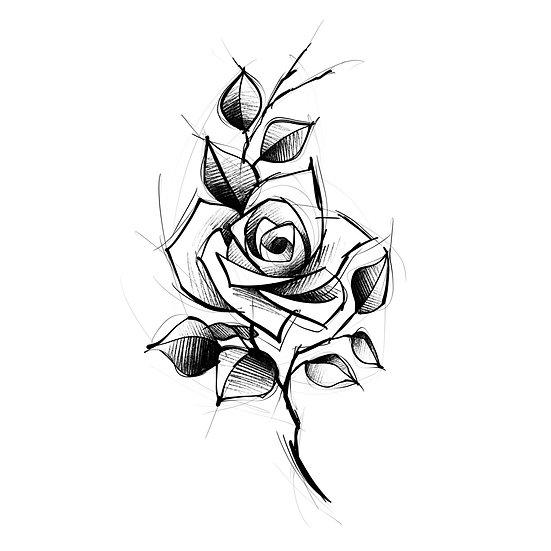 Rosa Sketch