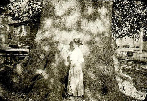Plane tree in Trsteno with a lady, the photo from 1900