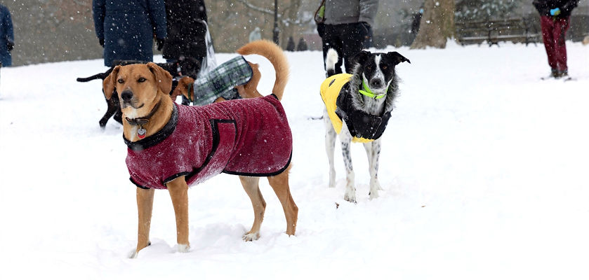 Snowday_121720_AC%2520(43%2520of%2520116