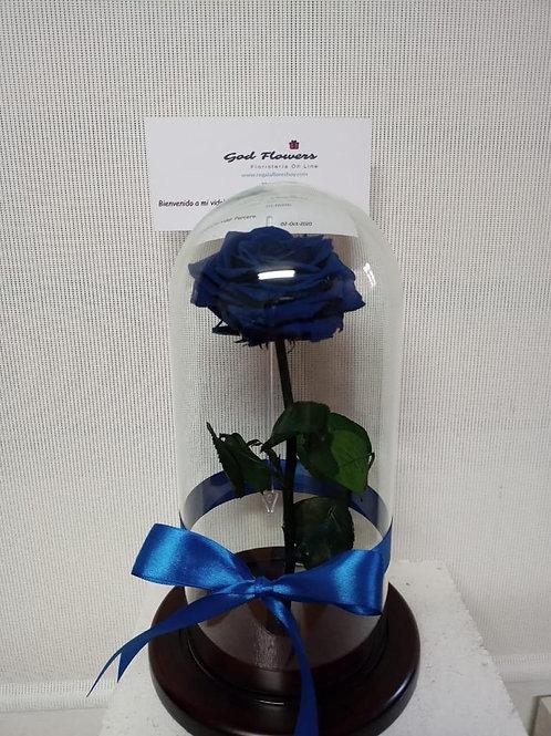 Rosa preservada blue