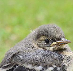 bird-baby-fluffy-plumage-cute-animal-world.jpg