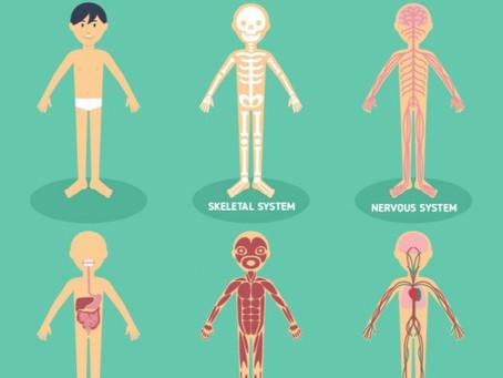 Wat is het verschil tussen osteopathie en fysiotherapie?