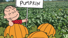 Pick your own Pumpkins this Fall!