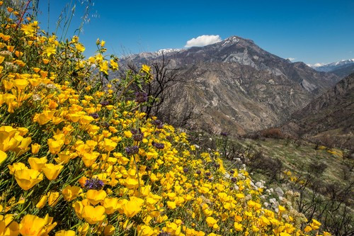 "John Muir called what is now Kings Canyon National Park ""A rival to Yosemite."""