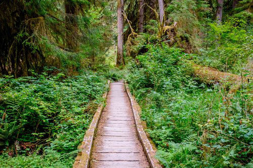 On the trail into the wilds of the Hoh Rainforest in Olympic National Park.