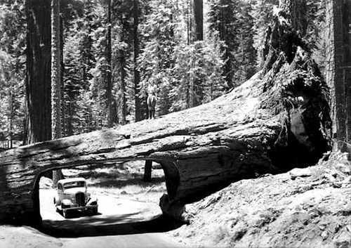 Tunnel Log circa 1940. Credit: Library of Congress.