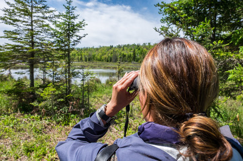 Just another day in our national parks... Stef bushwhacking Isle Royale with the world authority on moose and wolves!