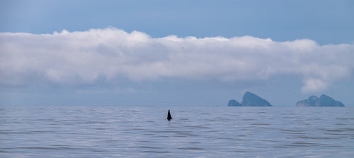 A rare orca whale sighting wields no drama, just astonishment.