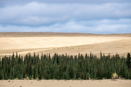 The most active Arctic sand dunes on the planet can be found at Kobuk Valley National Park in Alaska.