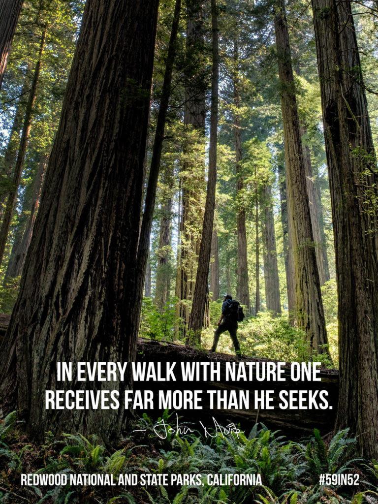 shareable-facebook_redwoods_03