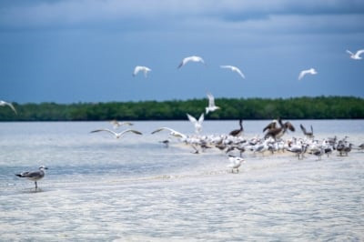 Wildlife at Everglades National Park   Credit: Stefanie Payne