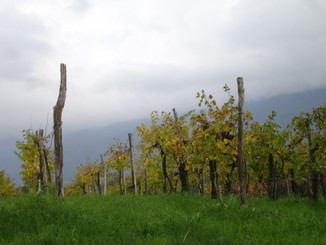 Discover Slovenia as wine country