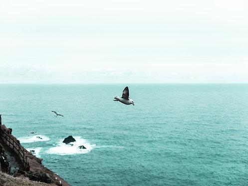 Fotografia Island
