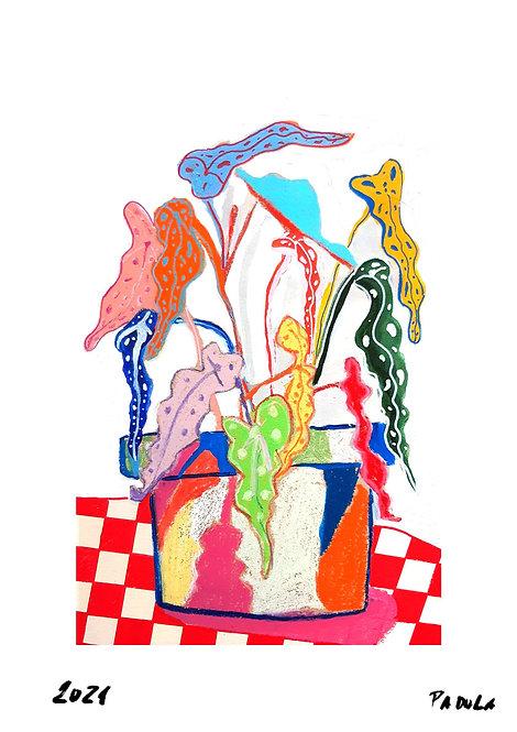 Ilustração Begônia Maculata