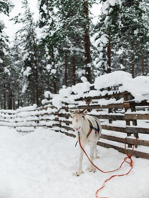Fotografia Rovaniemi