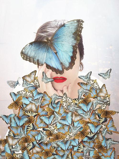Fotografia Butterflies