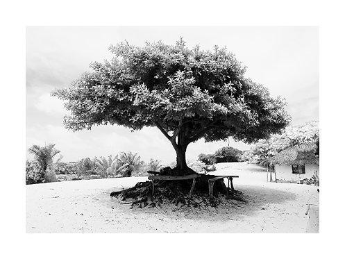 Fotografia Árvore Lençóis Maranhenses