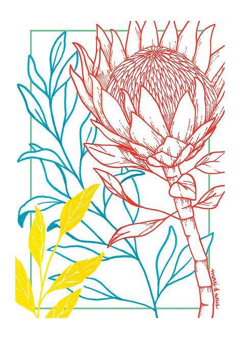Ilustração Protea Tropical