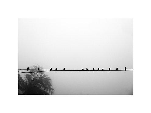Fotografia Pássaros - Paranapiacaba