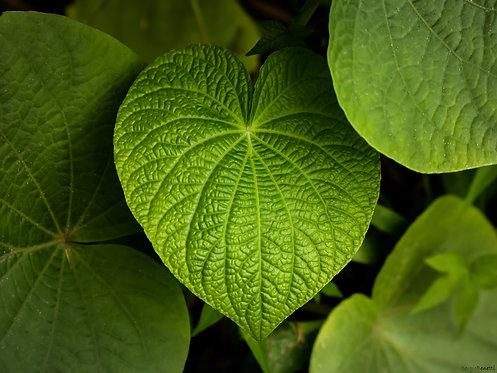 Fotografia Verde Vicejante