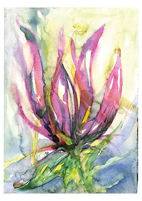 Ilustração Flores do Mar