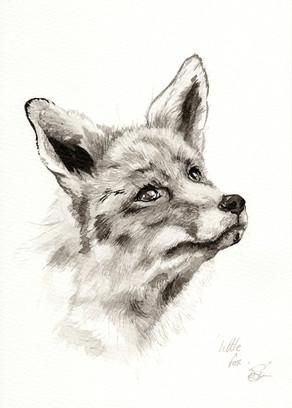 Litttle Fox