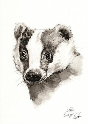 Little Badger
