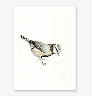 'Blue Tit' Print