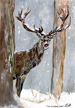 The Stag (Pack of 10 Christmas Cards)