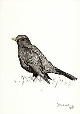 'Blackbird' Original Artwork